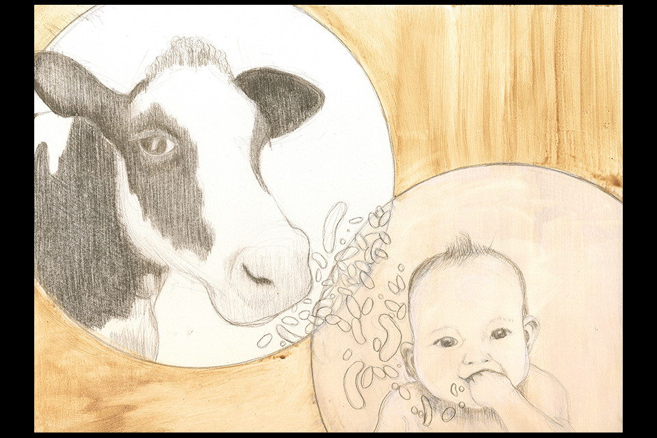 cow_baby-web