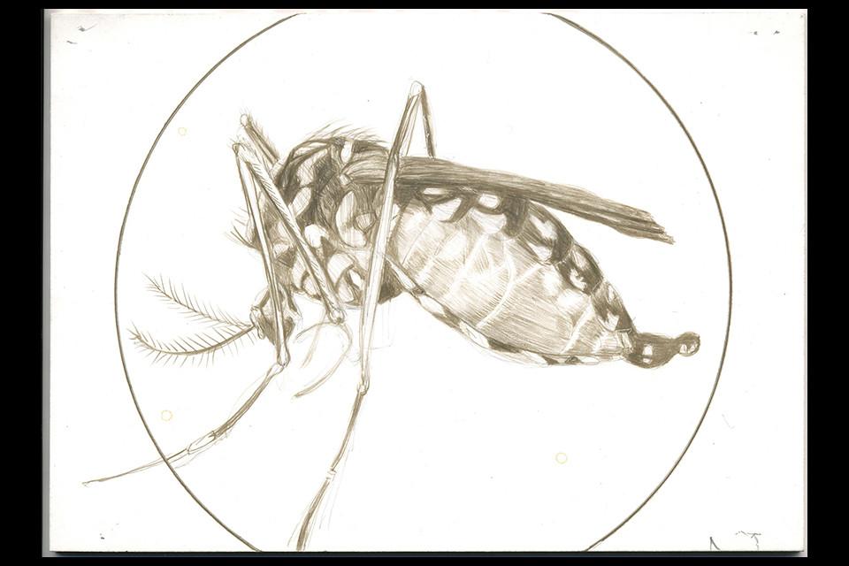 mosquito-web