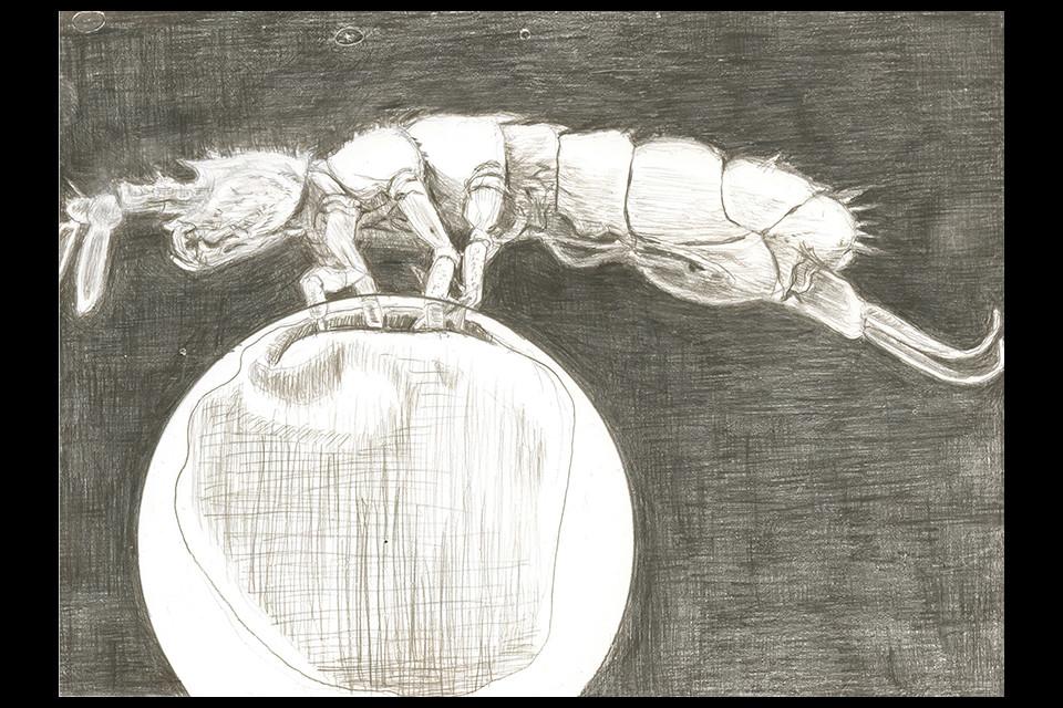 springtail-web