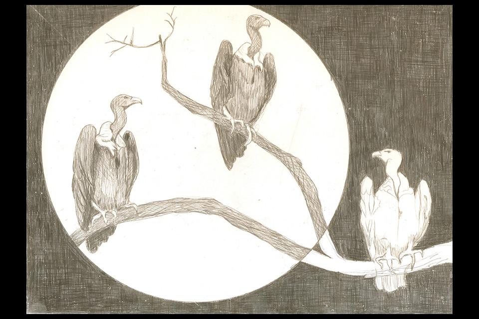 vultures-web